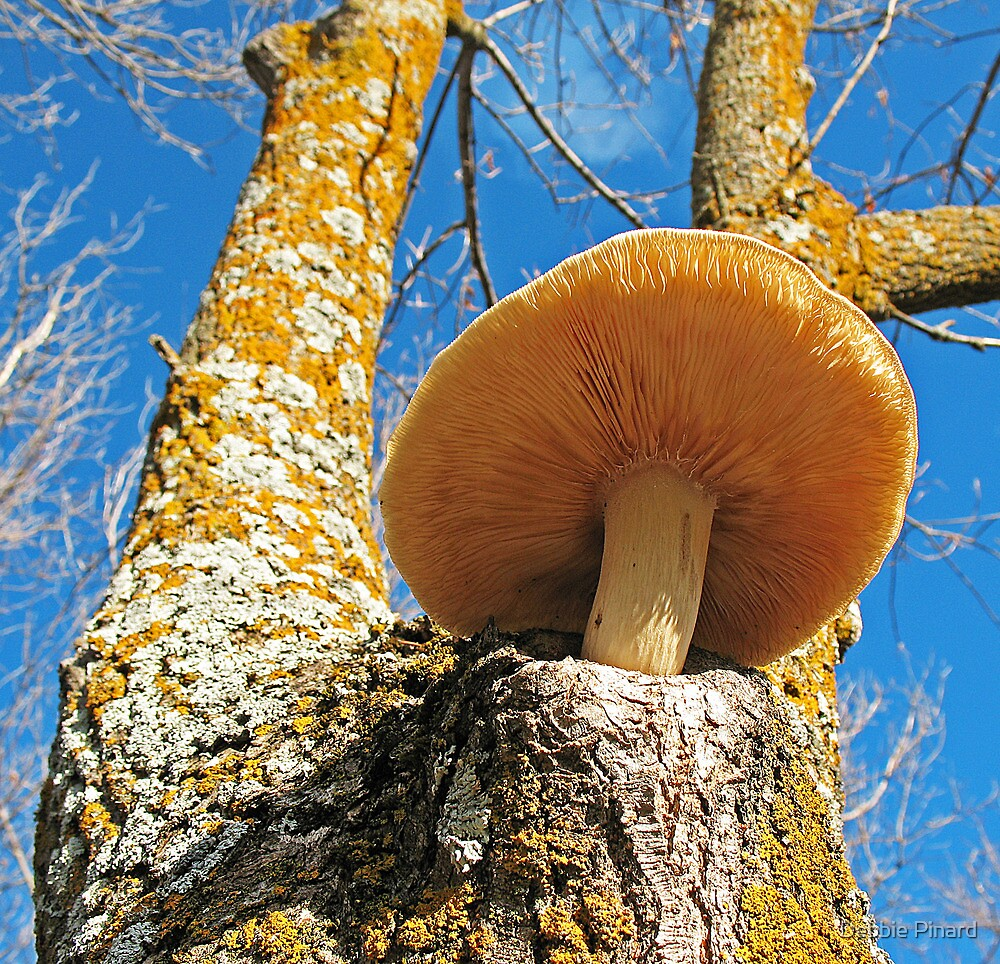 Mushroom on a Tree - Dunrobin by Debbie Pinard