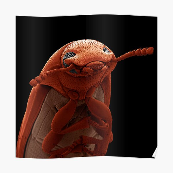 Science photographer of the year, pest, art, sculpture, animal, one, anatomy, biology, invertebrate, insect Poster