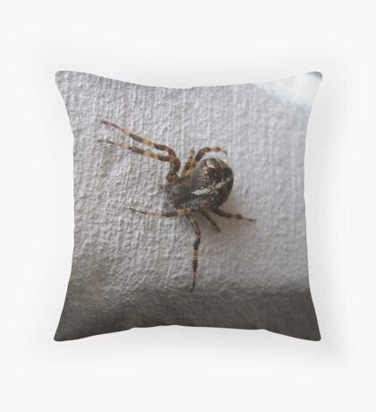 Araneus diadematus female (garden orb-weaver spider)  Throw Pillow