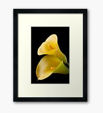 Pair of Yellow Calla Lilies  Framed Print