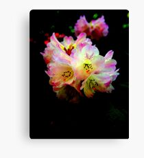 """Colorful Rhodies"" Canvas Print"