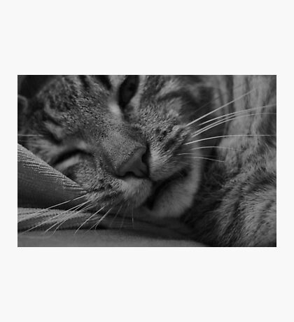 Sleepy Cat Photographic Print