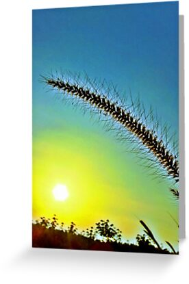Grass spike with seeds in front of setting sun by Horst Dammer