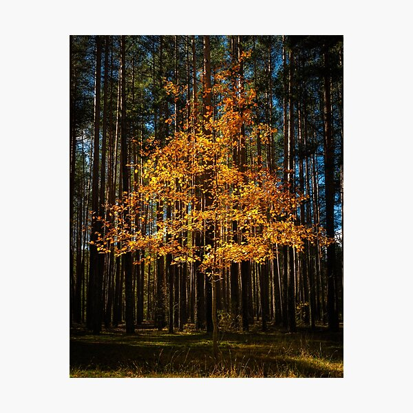 Golden Triangle  Photographic Print