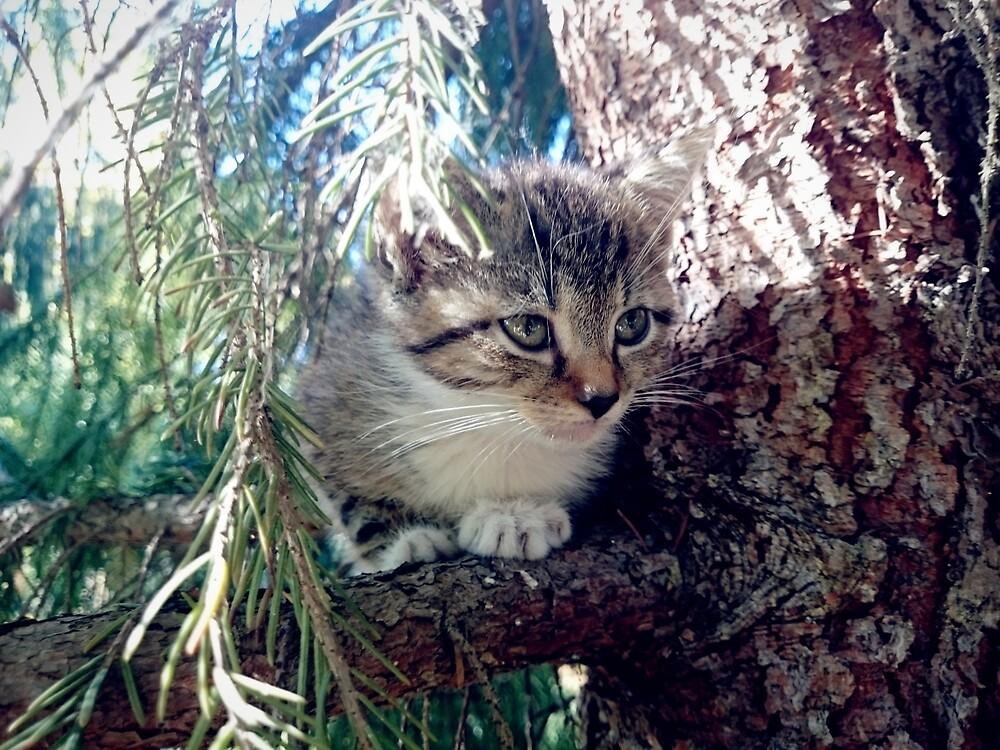 Tiger auf Baum von Gourmetkater