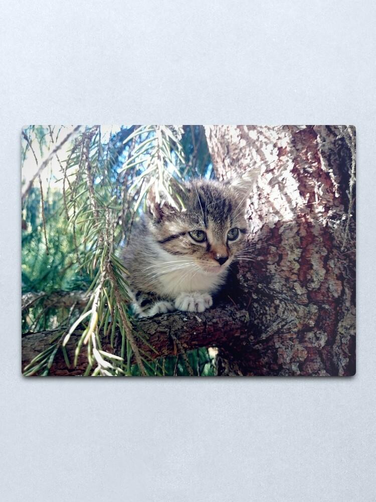 Alternative Ansicht von Tiger auf Baum Metallbild