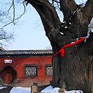 China - Chang's clan tree by Jean-Luc Rollier