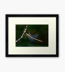 Dragonfly Salute....or maybe just an itchy eye! Framed Print