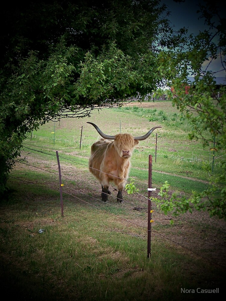 Cow Talk At The Fence by Nora Caswell
