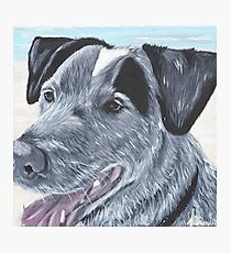Tinker at the Beach Photographic Print