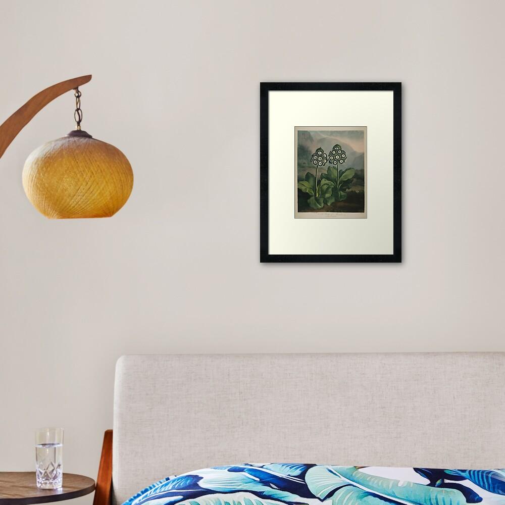 Botanical Auriculas Framed Art Print