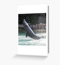 dolphin leaping Greeting Card