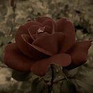 Victorian Rose by Dawn di Donato