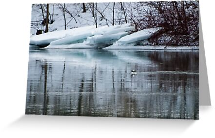 Bufflehead Duck and Ice Formation, Niagara River, Ontario by ArianaMurphy