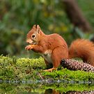 Red Squirl by Peter Wiggerman