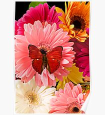 Red Butterfly On Mum Poster