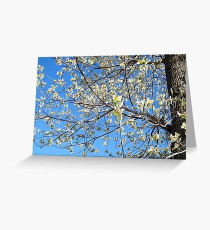 Dogwood Tree Beginning To Bloom Greeting Card