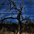 Night Falls by Barbara Manis