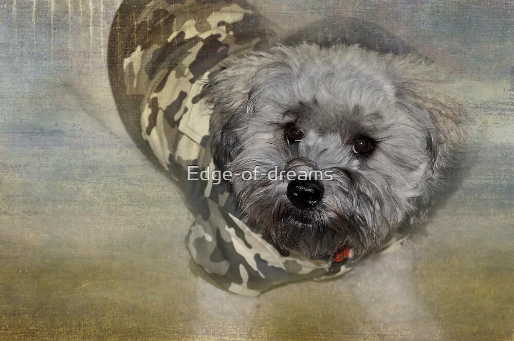Adventure Pup by Edge-of-dreams