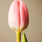 Stark Tulip Bloom by Brian Thedell