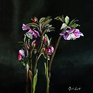 Christmas Rose by atelier1