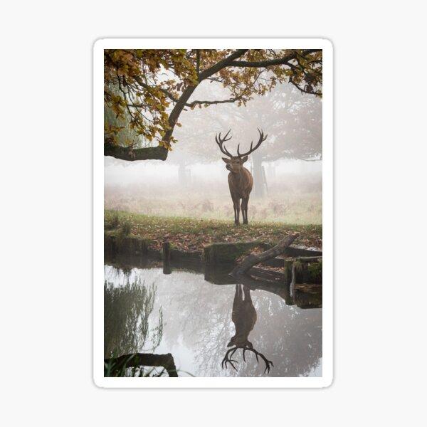 Red Deer Stag Sticker