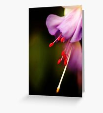Dream of purple softness Greeting Card
