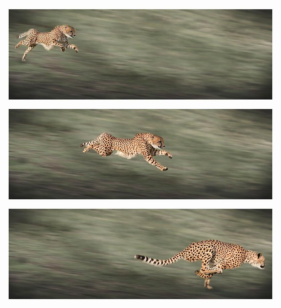 Cheetah frames by markbeckwith