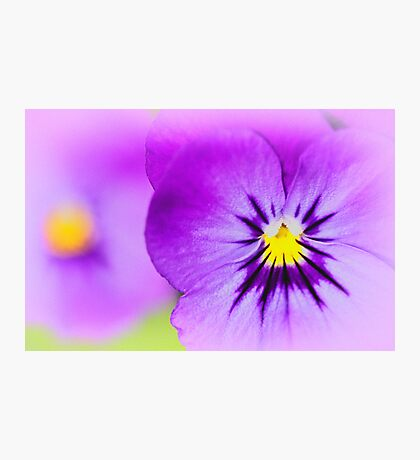 Violas Photographic Print