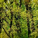 Green Green  delightful wonderful green of Spring . by Brown Sugar . You can see it only for a few days in the year . Favorites: 1 Views: 378. Woows !!! by © Andrzej Goszcz,M.D. Ph.D