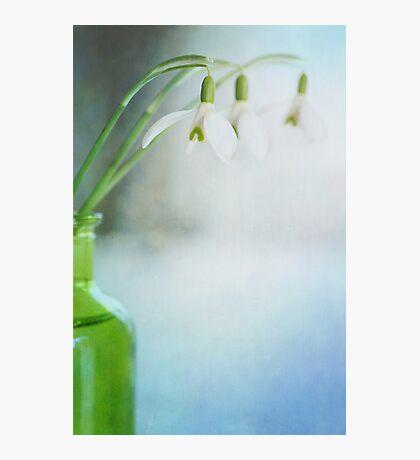 Fresh Spring Photographic Print