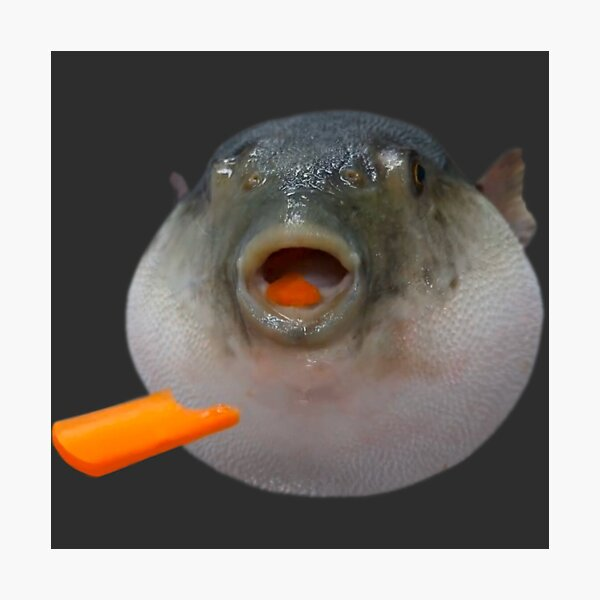 """""""Pufferfish Eating a Carrot Meme """" Photographic Print by ..."""