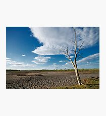 Another Dead Tree Photographic Print