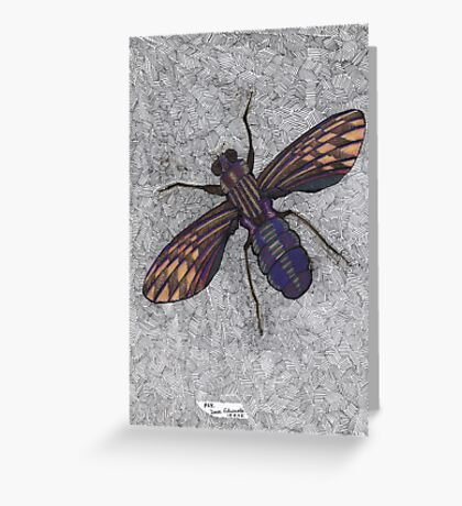 074 - FLY (Ink and coloured pencils) - 1998 Greeting Card