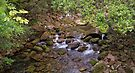 Patience and Tolerance_Mossman Gorge_FNQ by Sharon Kavanagh