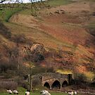 Peak District sheep and bridge by Michelle McMahon