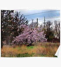 Lone Fruit Tree Poster
