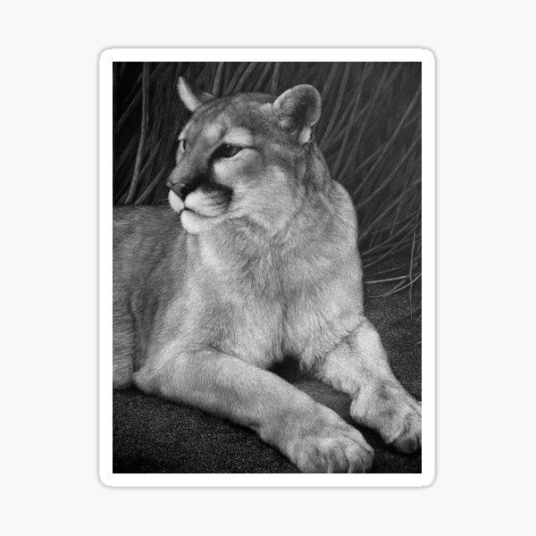 Reno, a mountain lion Sticker