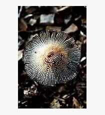 One Fungi Photographic Print