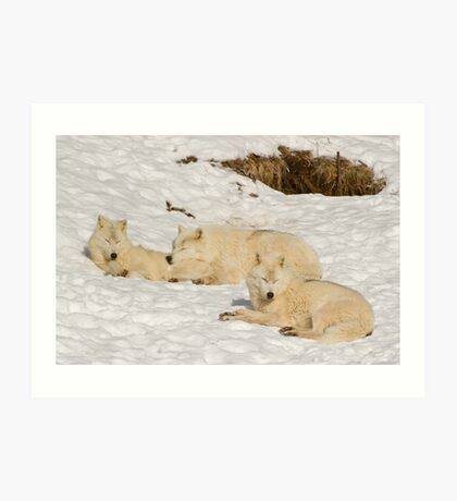 Three not so bad wolves Art Print