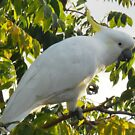 Profile of a Cockatoo by LBrammer