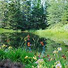 Pond in the Woods by Sandra Fortier
