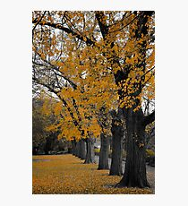 Autumn's Golden Gown  Photographic Print