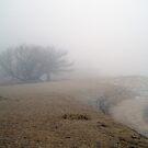 Midmorning Fog Off Lake Michigan by Anthony Roma