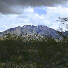 Mojave Storm by Christine Frydenborg Dargon