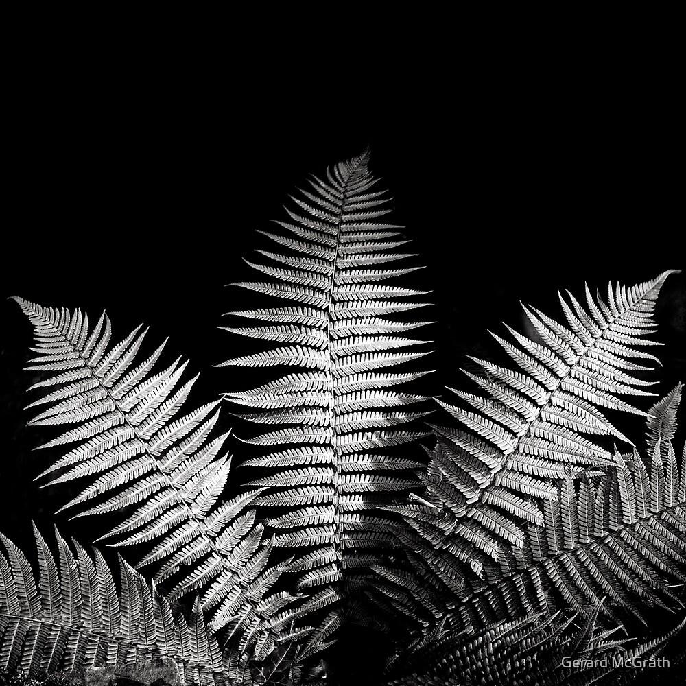 Ferns by Gerard McGrath