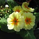 Sun kissed flowers. by jams