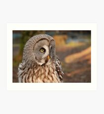 Grey owl in the afternoon Art Print