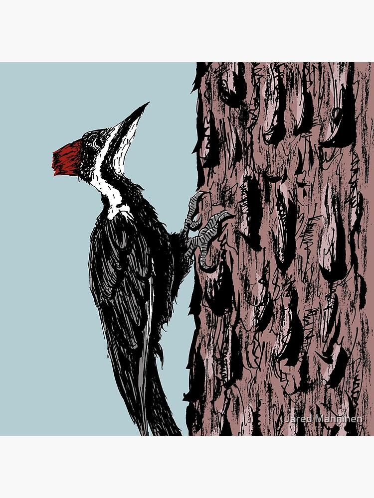 Pileated Woodpecker on a Jeffrey Pine Tree by JaredManninen