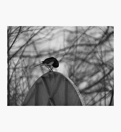 Dark Eyed Junco Photographic Print
